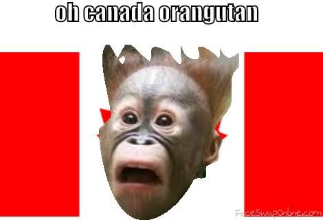 silly Canadian Orangutan