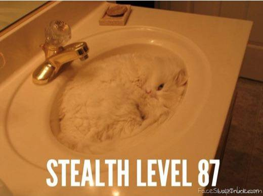 stelthy cat