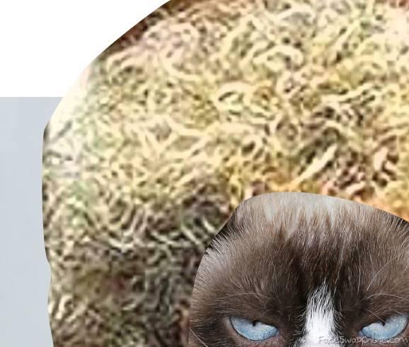 Grumpy hair