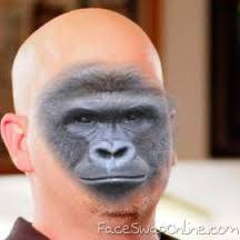 Harambe owns a pawn shop