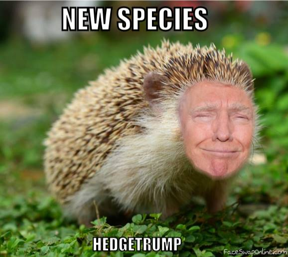 Meet Hedgetrump