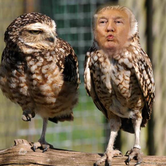 Trump Owl