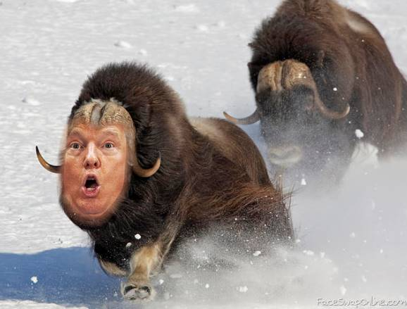 Trump in wild