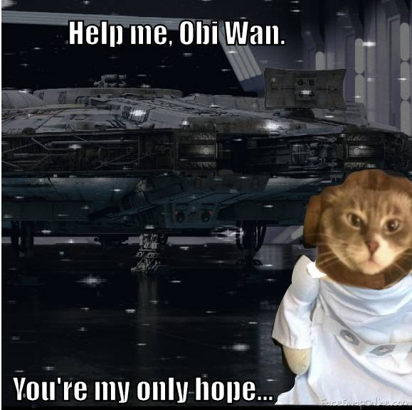 Star Wars Kitty