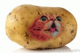 cat potato