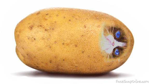 grumpy potato