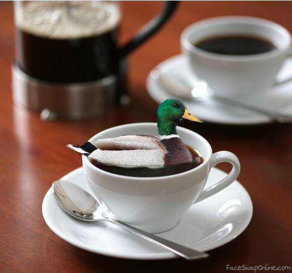 AHHH there's a duck in my coffee