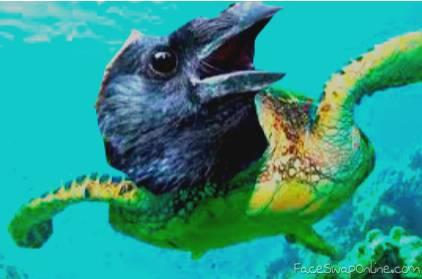 Swagmaster69's pet Pigeon