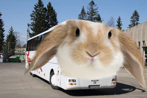 The Bunny Bus