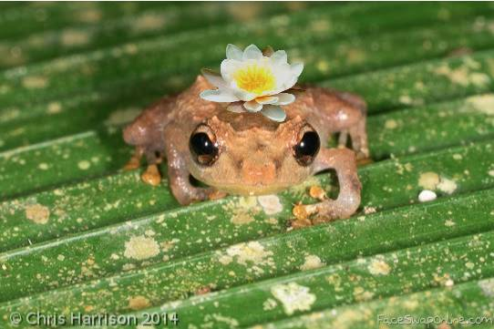 frog-lily