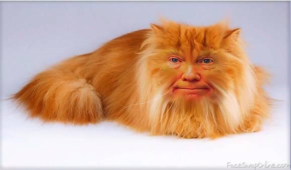 Kitty Trump