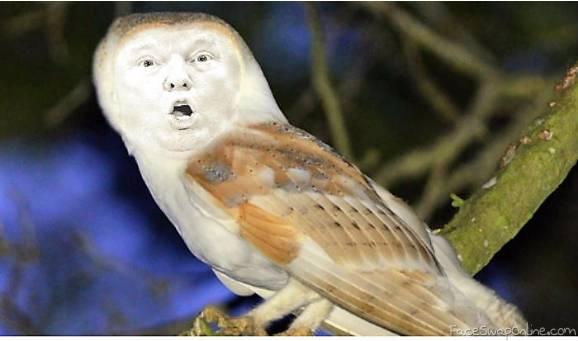 The Trump Owl
