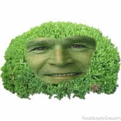 George W. Bush Bush