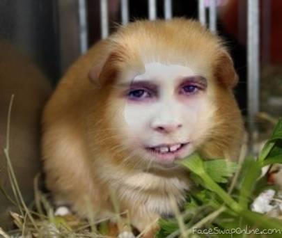 Misha is Guinea pig !