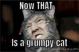 A reallly grumpy cat