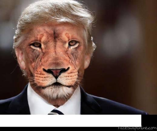 Lion Trump