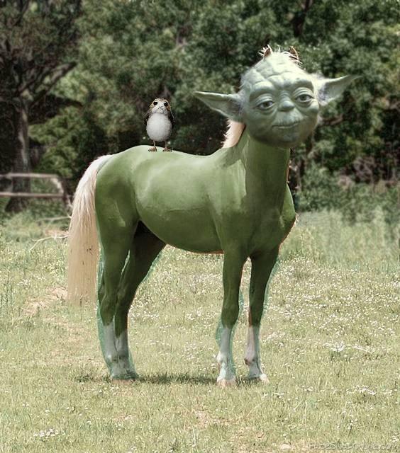 YODA-HORSE!
