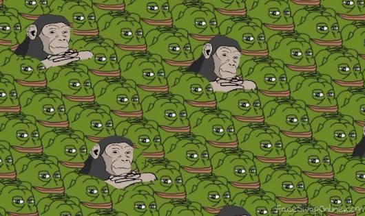 monkey groyps
