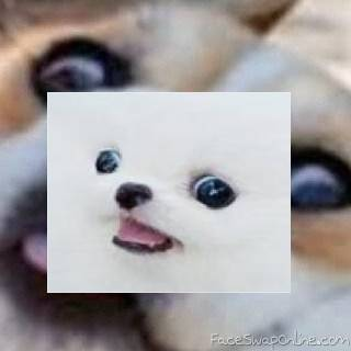 doggo septon