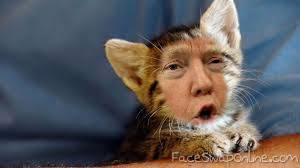 cat trump