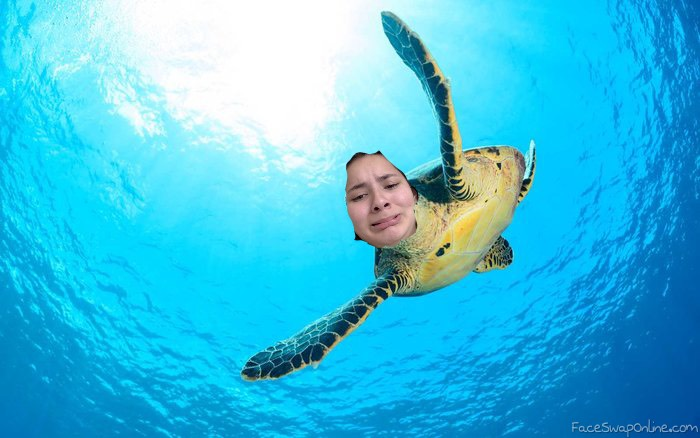 me as a turtle