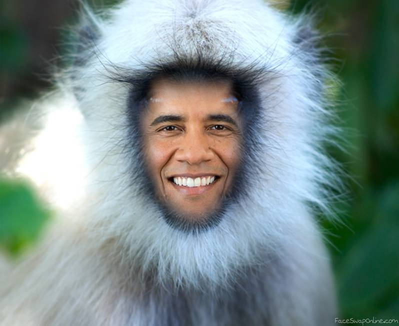 The Wild obamachuin