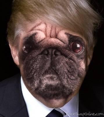 President Donald Pug