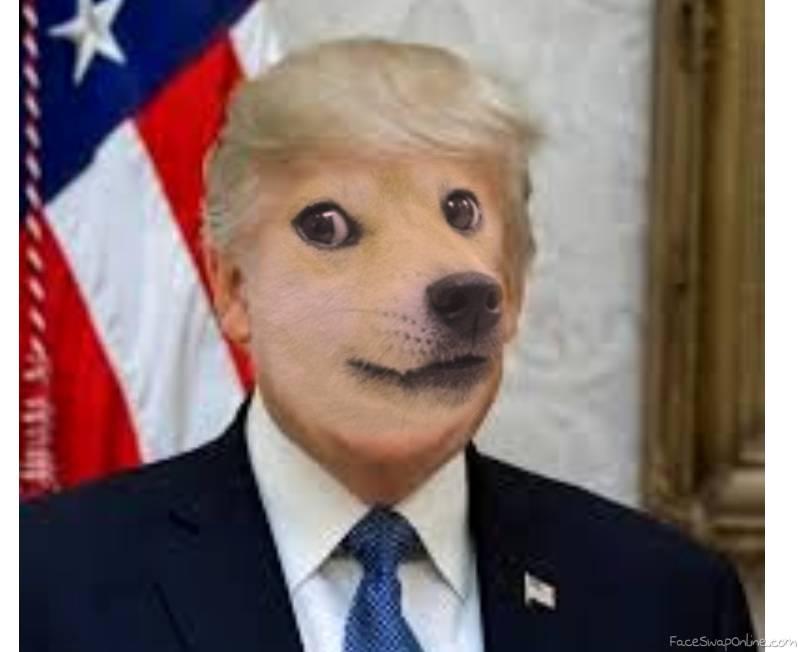 HAH DONLD DOG E LAMO 😂😂😂😂😂😂 🌊☑