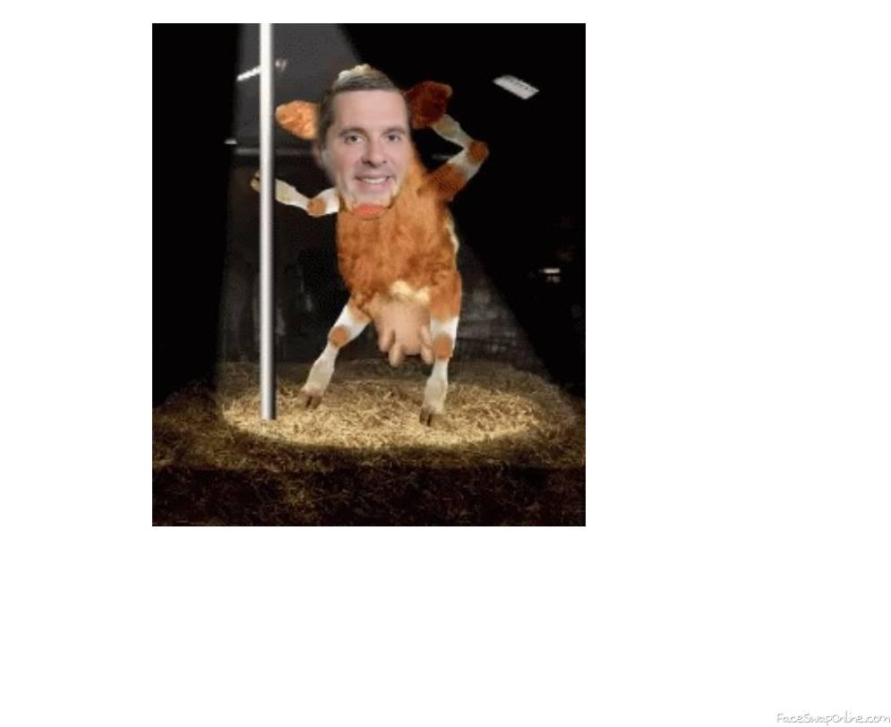 Nunes cow dance