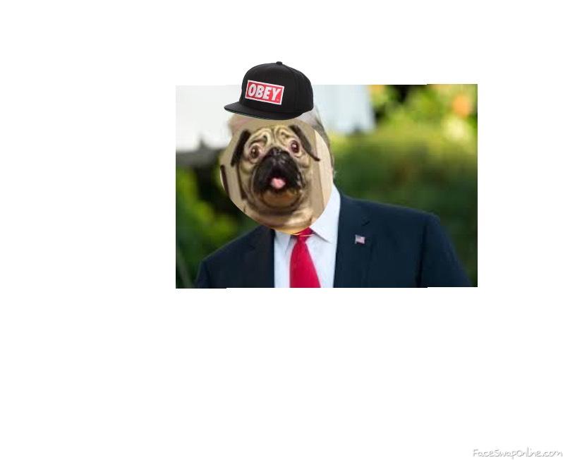 Pug trump