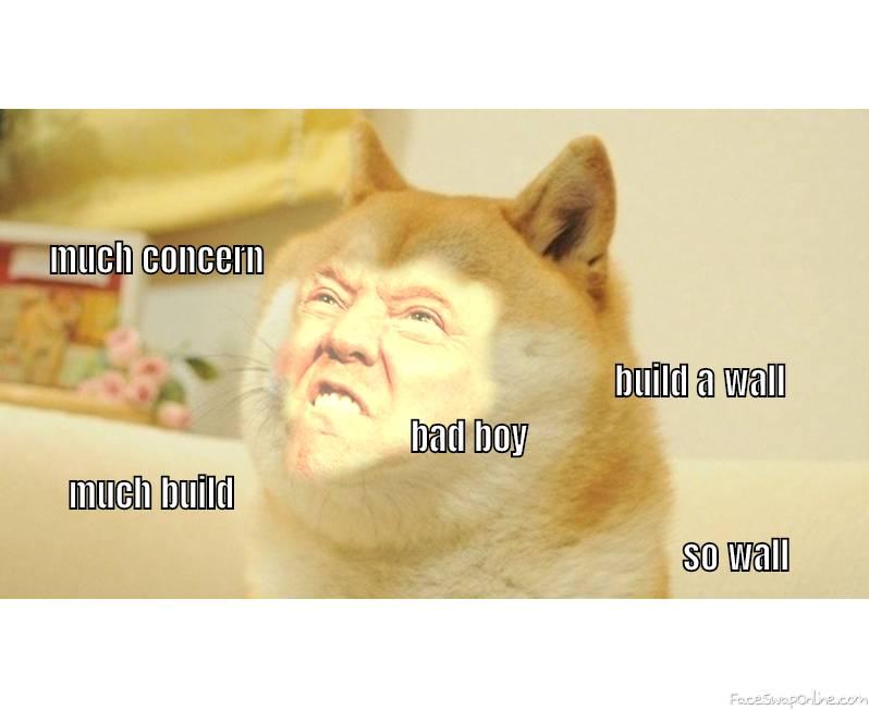 trump doge