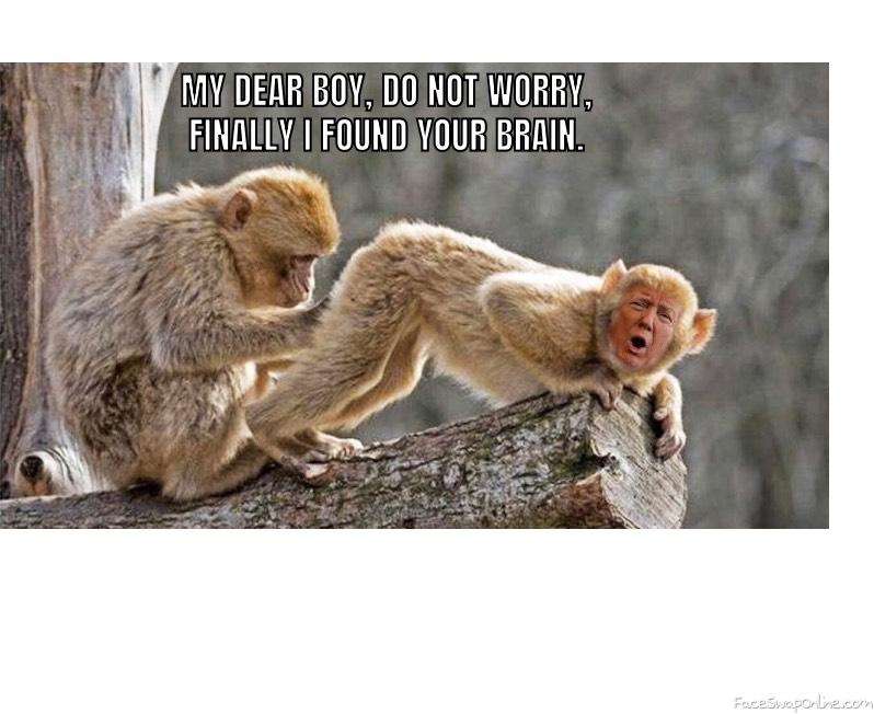 Found brain