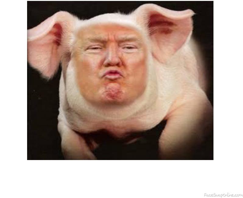The donny pig