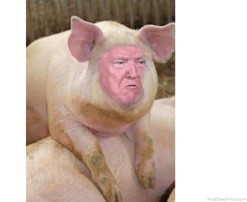 The donny pig 1