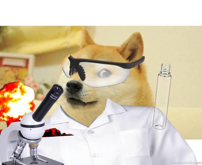 Doge Science