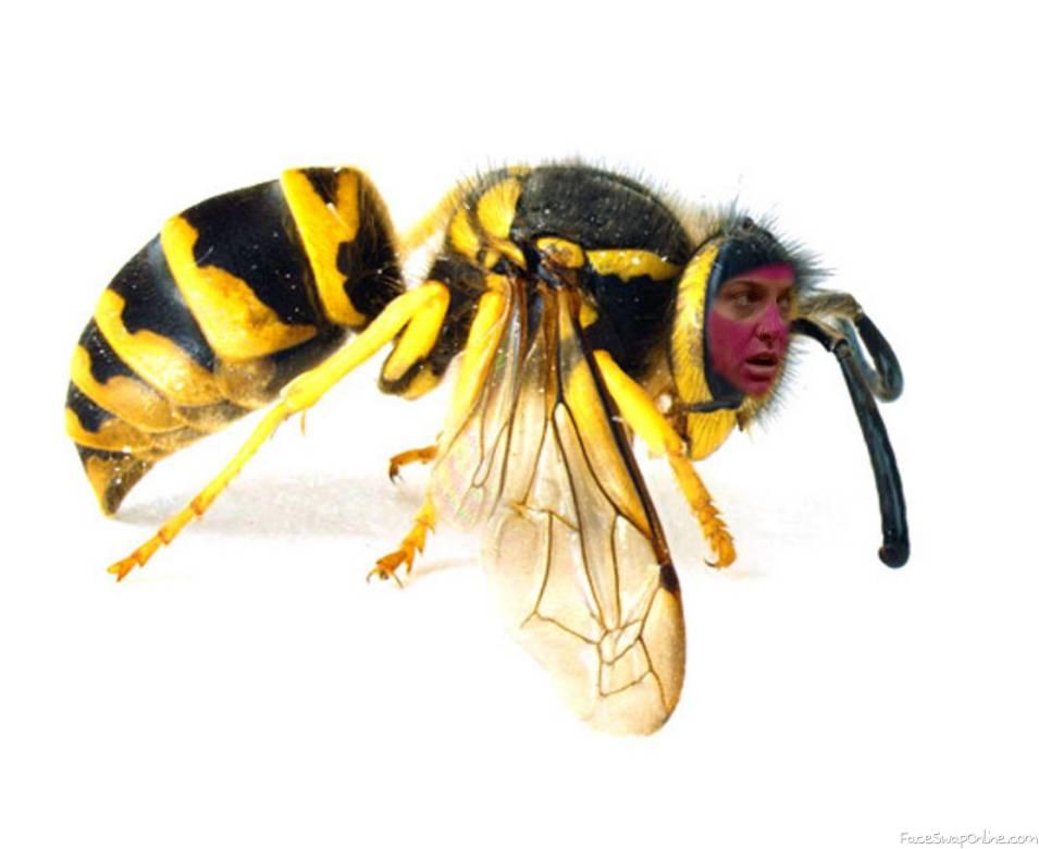 Christie Yellow Jacket