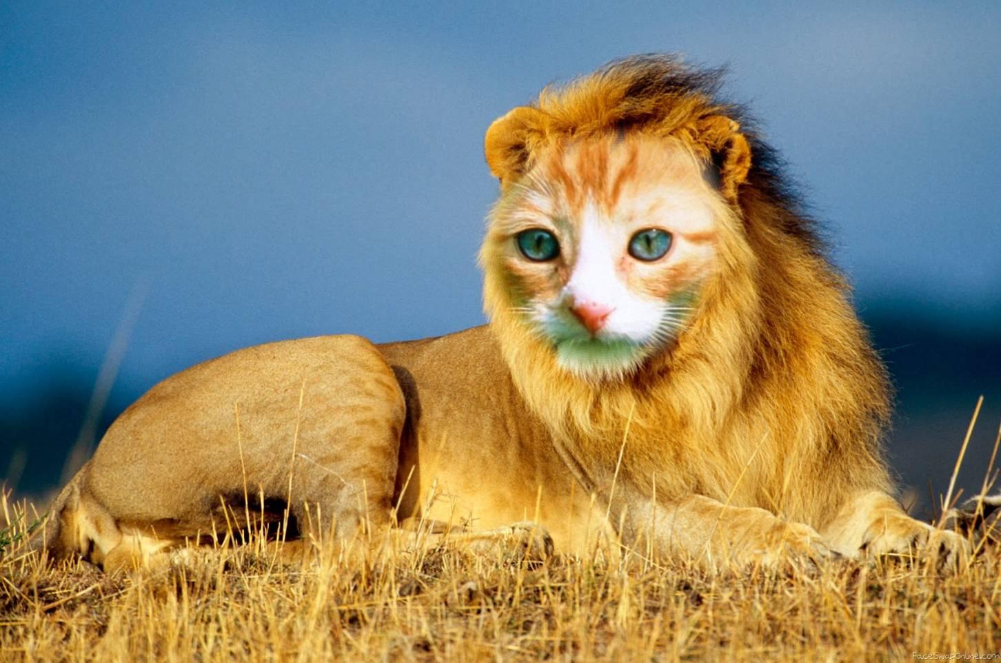 Lion King Kitty