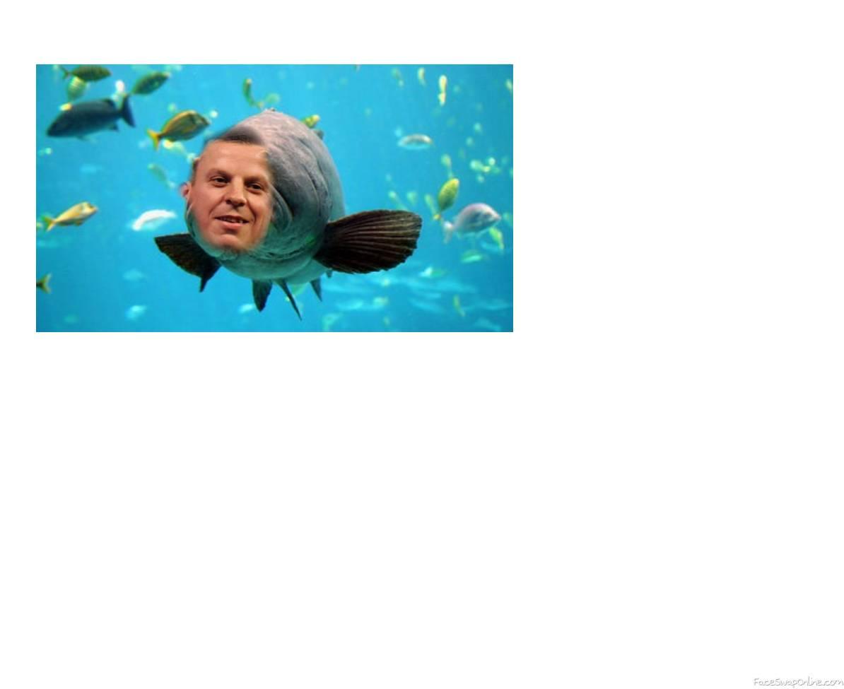 ChizzFish