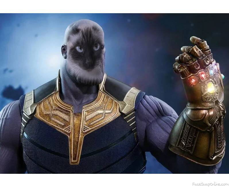 Cats Will Take Over