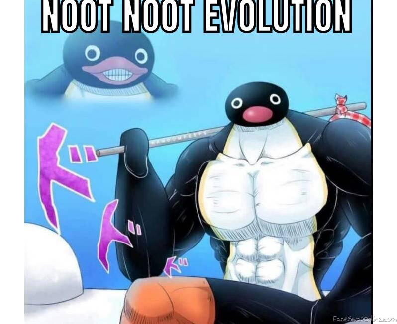 NOOT NOOT evolves