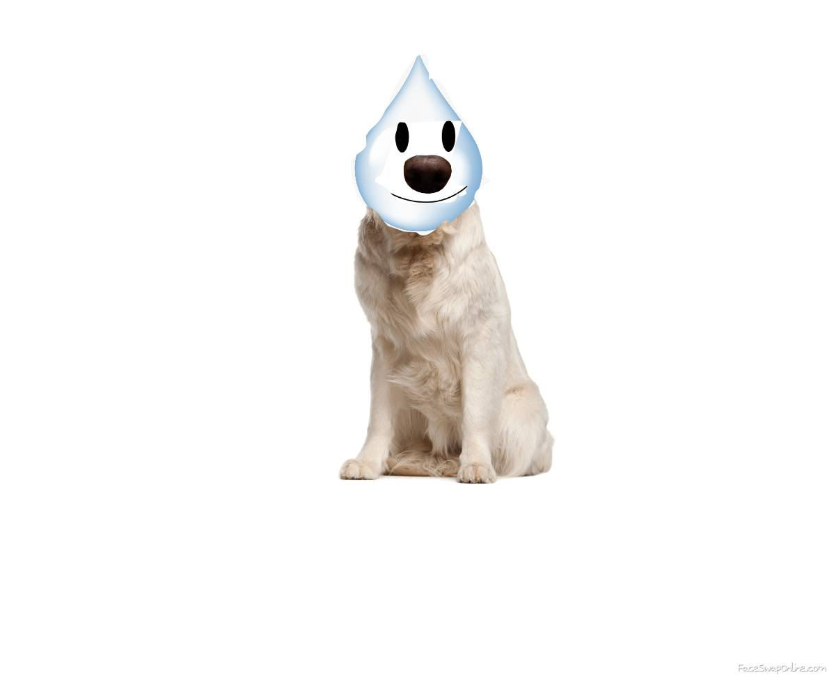 Water doge