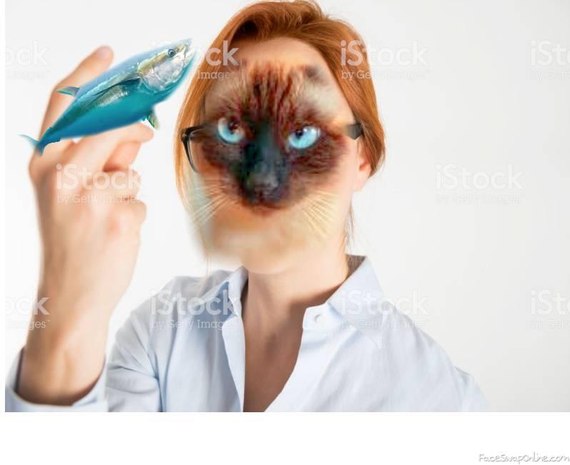 Cat...No.....No....Nooo-.......