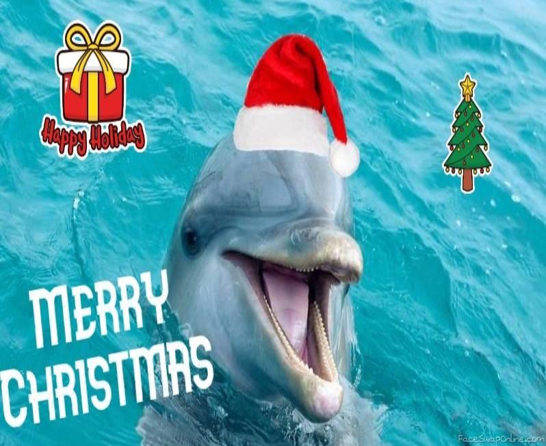 Jolly old saint Dolphin