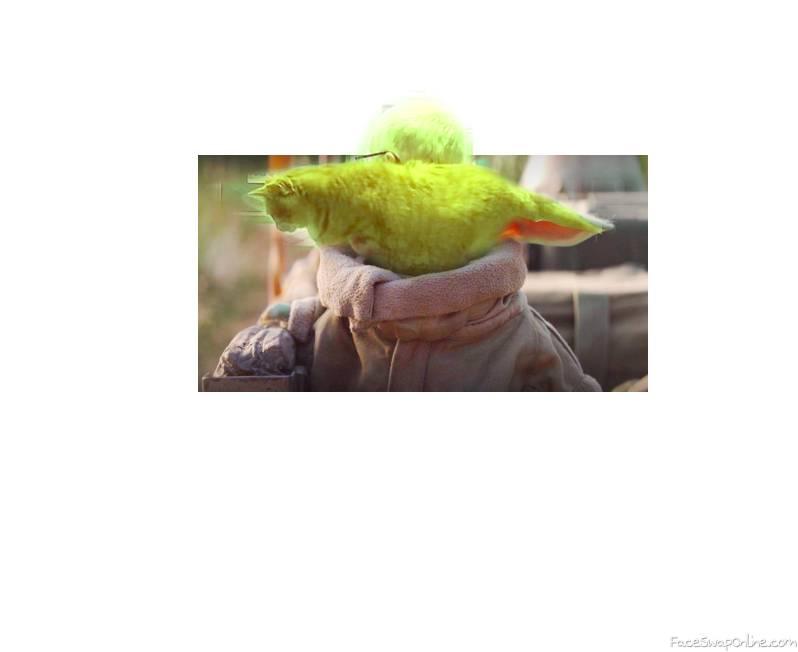 Yoda Cat 1