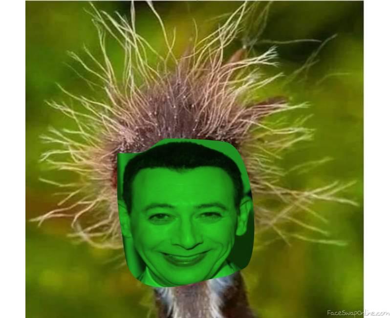 Sick Pee Wee Herman Bird