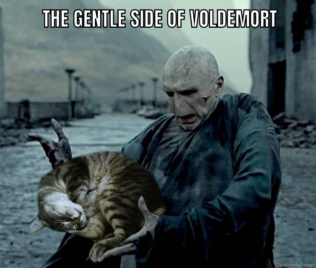 Voldemort holding a cat