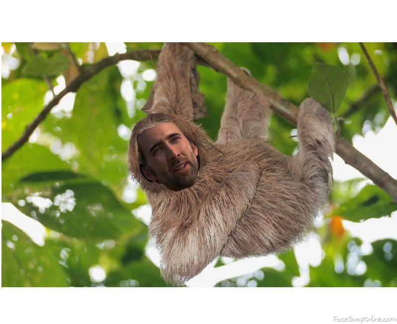 nick sloth