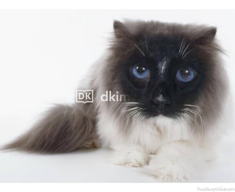 Blue And White Snowshoe