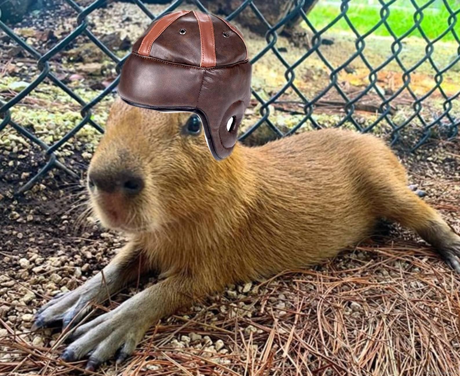 The Carolina Capybaras