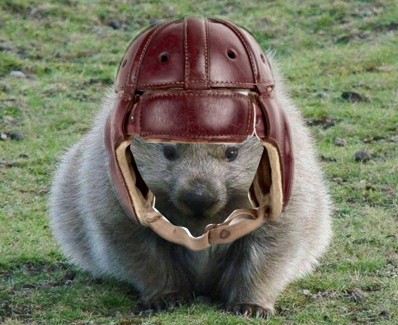 The Wilmington Wombats
